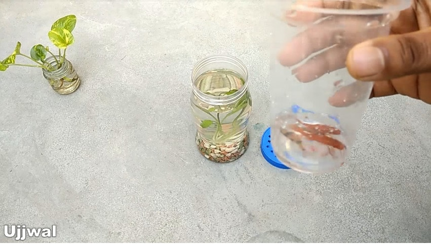 How to make bottle aquarium12