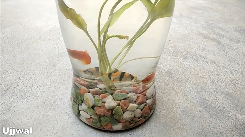 How to make bottle aquarium14