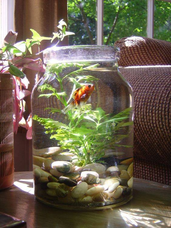 How to make bottle aquarium2