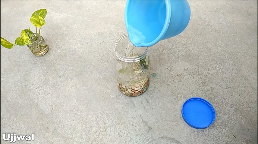 How to make bottle aquarium8