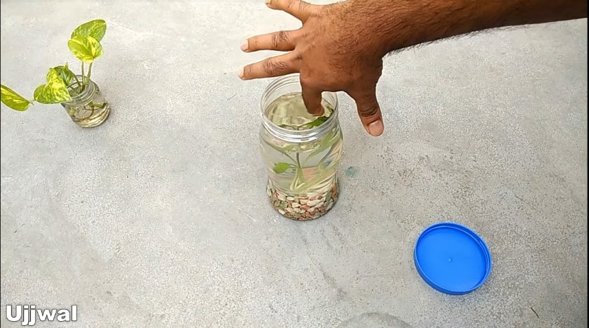 How to make bottle aquarium9