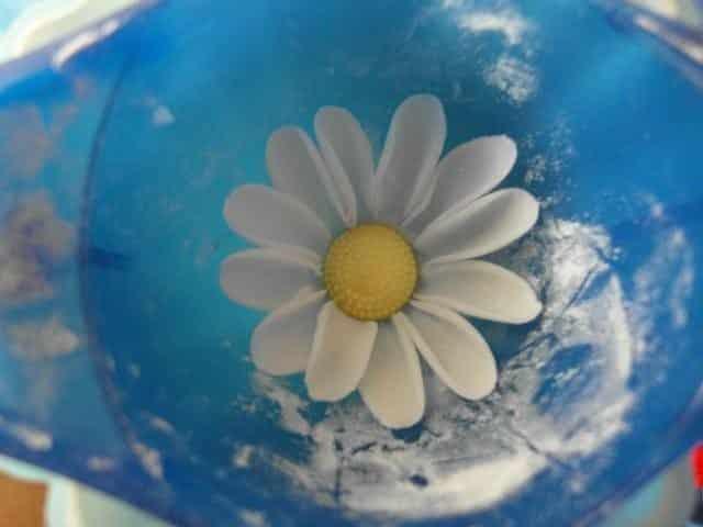 Daisies from Sugar Mastic 8